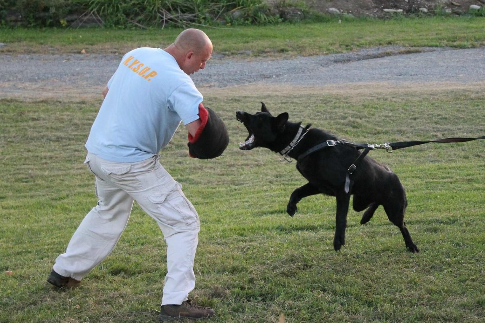 K-9 Training/Sales Albany NY Schenectady NY Northeast